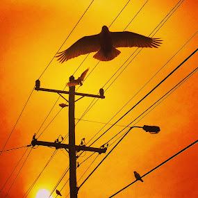 Bird on a Wire by Greg Harrington - Uncategorized All Uncategorized