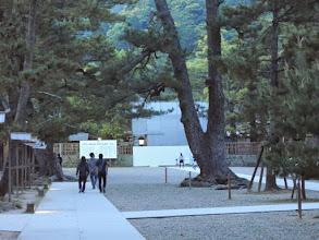 Photo: 松が美しい。