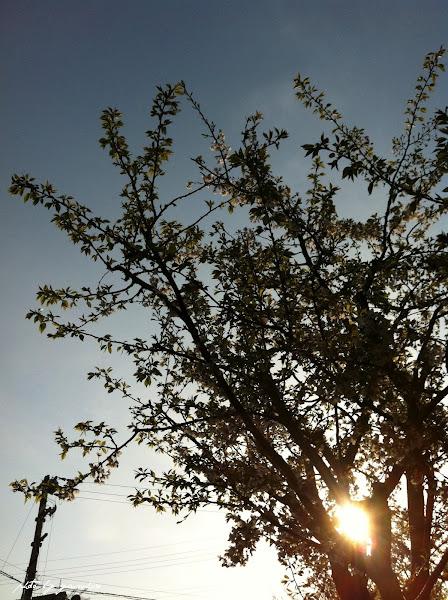 Photo: April 10, 2012 朝のソラと桜