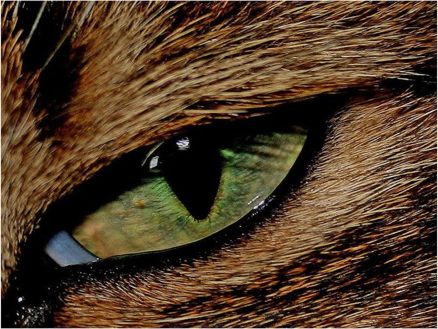 Cats eye by Marissa Enslin - Animals - Cats Portraits (  )