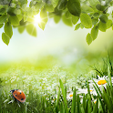 Green Spring Live Wallpaper icon