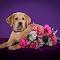 Dogs-4516.jpg