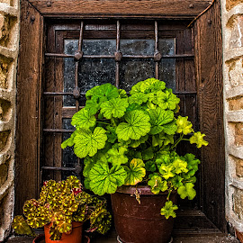 Two Plants in a Window by Richard Michael Lingo - Artistic Objects Still Life ( artistic objects, greenery, plants, still life, window )
