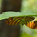 Common Maplet