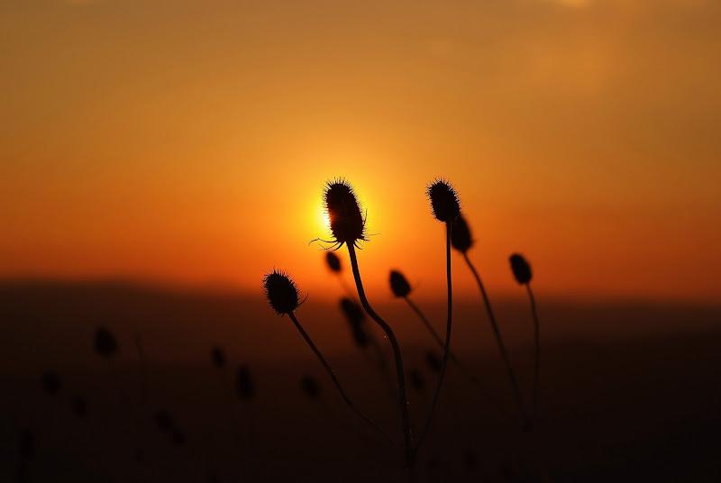 nature silhouette di Mikmata