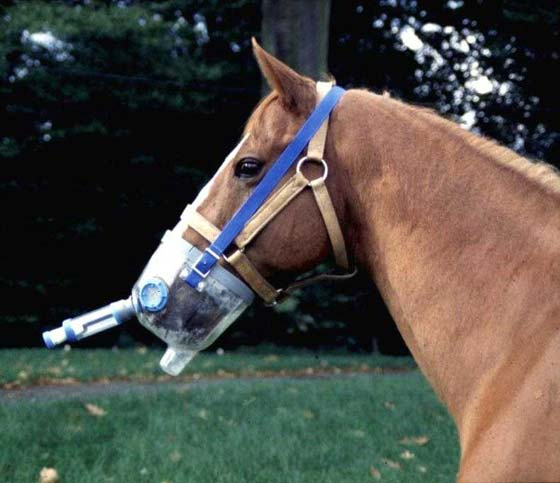 Device designed for metered-dose administration in the horse.