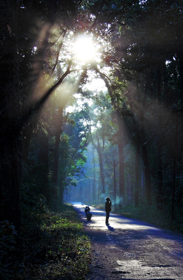 waiting by Biplab Majumder - Landscapes Forests ( sun rays with mist, sun rays in jungle, forest, india, landscape, rays )