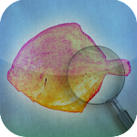 Fishbook icon