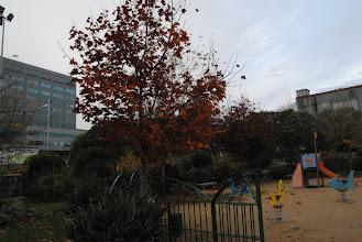 Photo: Pradairos no Parque do Cogomelo quedando xa sen flor pero aínda coa tonalidade torrada do outono.