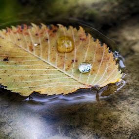 by Vukosava Radenovic - Nature Up Close Leaves & Grasses (  )