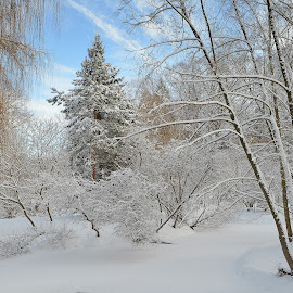 by Vida Jankaitiene - Nature Up Close Trees & Bushes