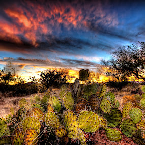 Sonoran Desert by Ed Mullins - Landscapes Deserts ( sonoran desert, desert, hdr, sunset, arizona, sonora, prickly pear, cactus )