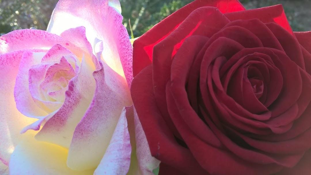 Kukkakauppa Valkeakoski