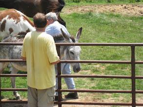 Photo: The donkey is back
