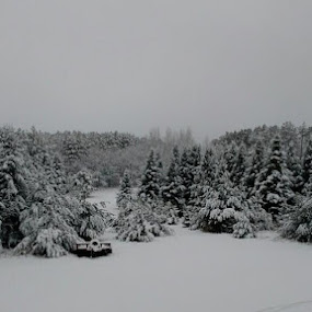 Snowy Day by Debra Rebro - Landscapes Weather (  )