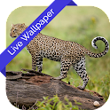 3D Leopard Cube Live WallPaper icon