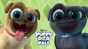 Puppy Dog Pals thumbnail