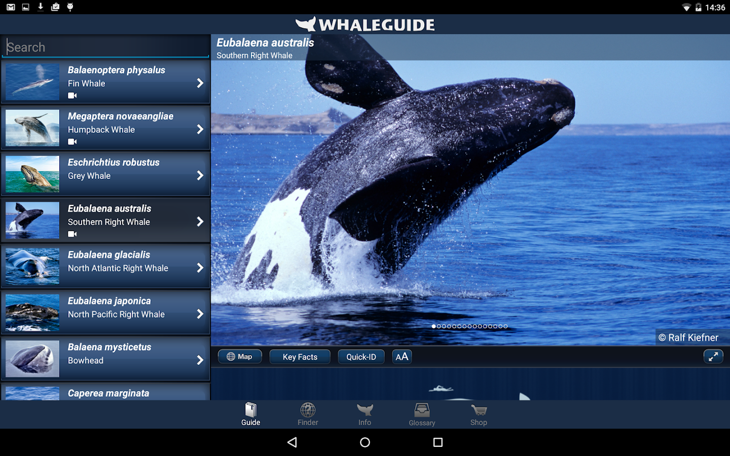WhaleGuide- screenshot