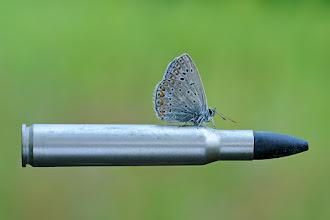 Photo: 神風 Divine Wind  http://lepidoptera-butterflies.blogspot.com/