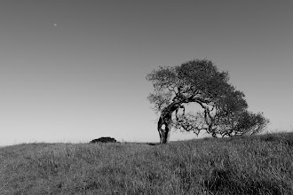 Photo: I've taken a lot of shots of this tree, and none really capture it all that well. I thought this particular shot worked better in black and white.