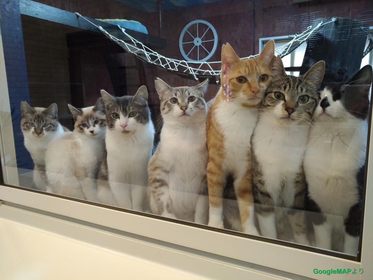 猫カフェ ねこひげ トラ猫軍団 | 郡山市喜久田町