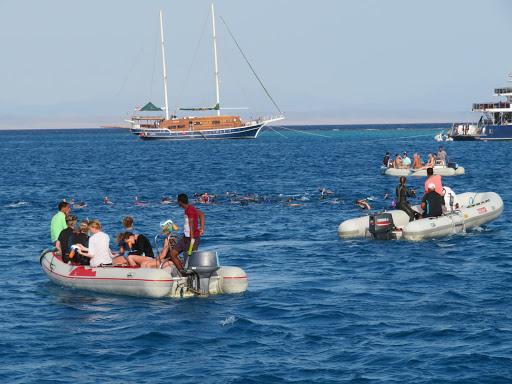 Dauphins dans la baie de Sataya en Egypte