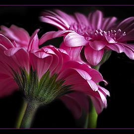 by Darko Kordic - Flowers Flower Arangements