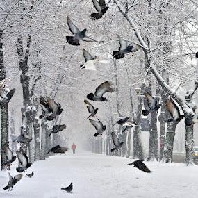 Winter street by Ion Alexandra - City,  Street & Park  Street Scenes ( pigeon, flight, bucharest, winter, empty road, snow, trees,  )