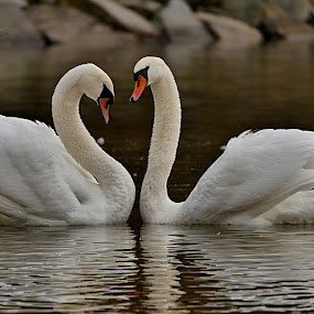by Lenka Bryndová - Animals Birds