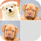 Puppy Photo Memory Game icon
