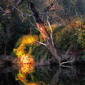 Tree by the river by Vladimir Krizan - Nature Up Close Trees & Bushes