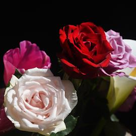 very nice  bouquet flower by LADOCKi Elvira - Flowers Flower Arangements ( garden nature plants tree blossom floral flower )