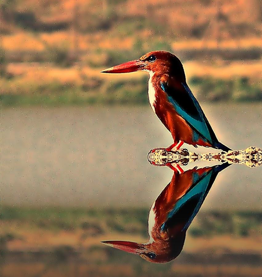 by Harshad Deshpande - Animals Birds