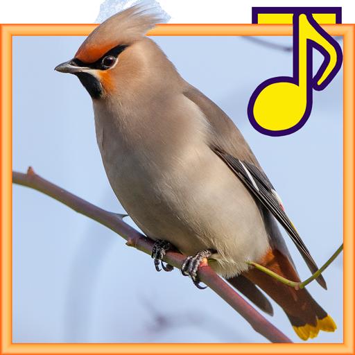 Птицы леса для детей (app)