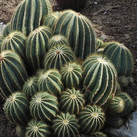 Cactus by Andy Dean - Nature Up Close Other plants (  )