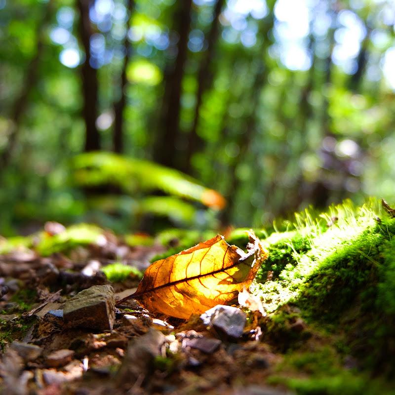 Le foglie cadono... di Merlograziano