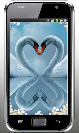 Swans Love live wallpaper