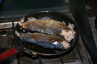 Photo: Big fish fry. Total of eleven trout caught by Ron G., Jacob, Steve M., and son Keegan.