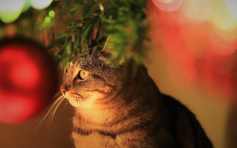 Sotto l'albero e' piu' bello... di ManuelGoWest