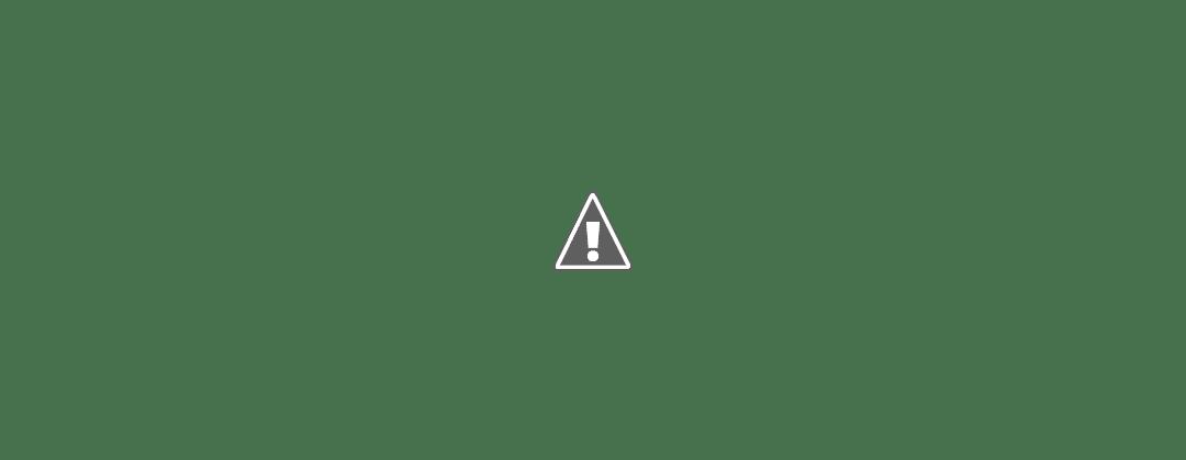 Crecimiento del jardín vertical en cuatro meses
