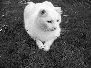 """Photo: """"Verdi on the green...""""  Cicely Robin Laing © 2013"""