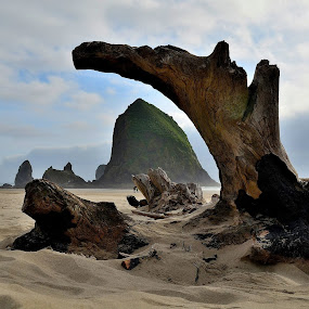 Dead tree on Cannon Beach by Doug Keder - Landscapes Beaches ( landscape, beach )