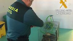 El macaco incautado, en una jaula