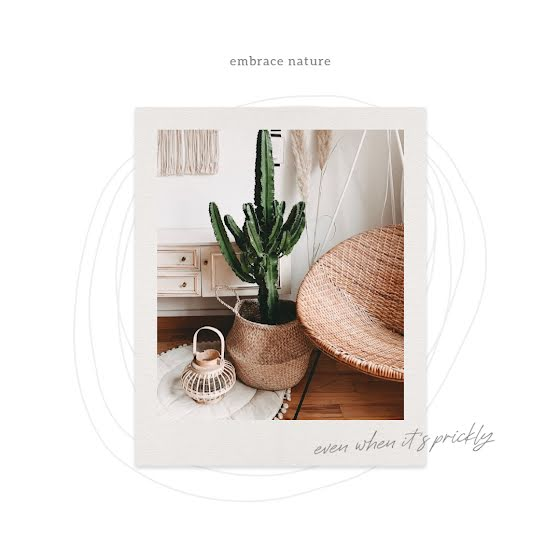 Indoor Cactus - Instagram Post Template
