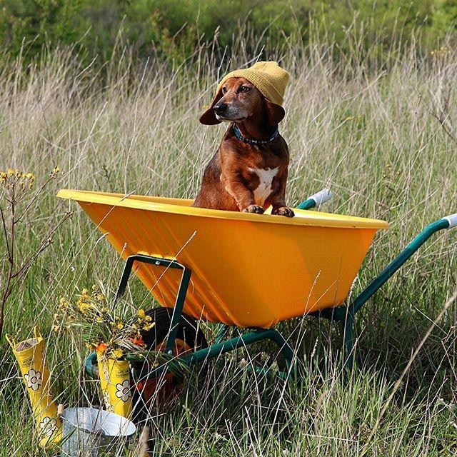 il cane in giallo! di utente cancellato