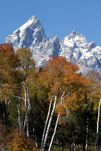 Photo: Grand Teton with aspen, GTNP, WY