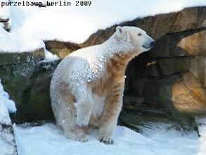 Photo: Runter zum Pool und den Schnee geniessen :-)