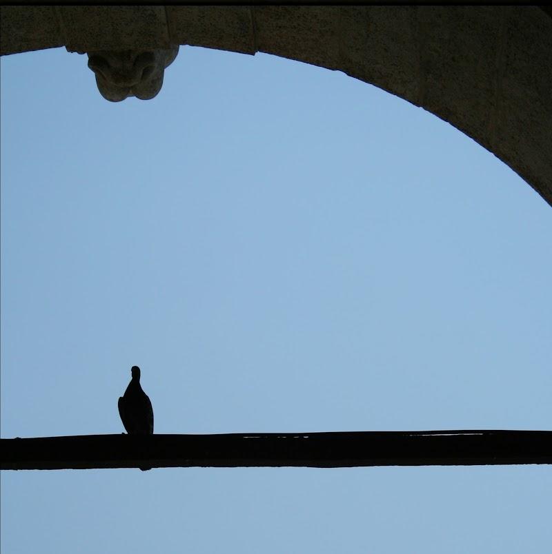 Piccione in piazza San Marco di dona's photography