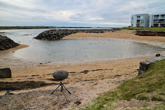 Photo: Listen to the recording at: http://fieldrecording.net/2014/07/19/food-feast-in-hraunsvik/