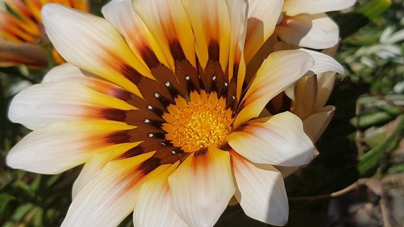 Fiore ambrato di Lifepicture